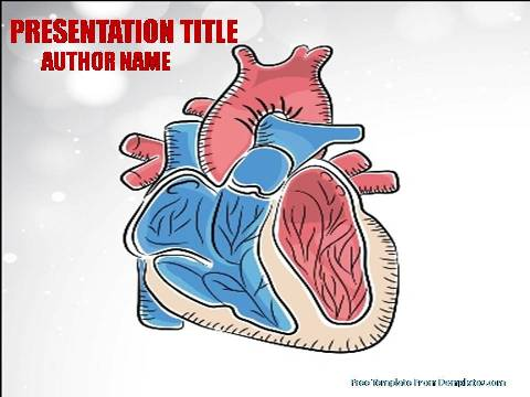Anatomy Of Heart Powerpoint Template Demplates