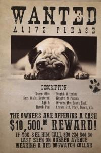 lost dog fyler template-11