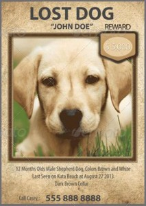 Lost Dog Flyer Template-13