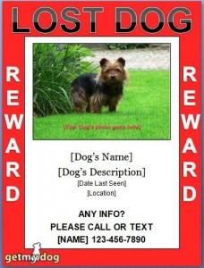 Lost Dog Flyer Template-18