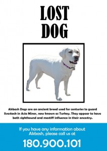 Lost Dog Flyer Template-2