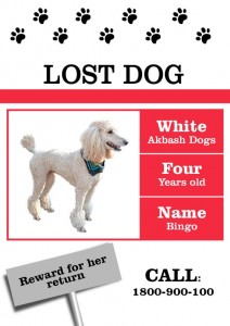 Lost Dog Flyer Template-3