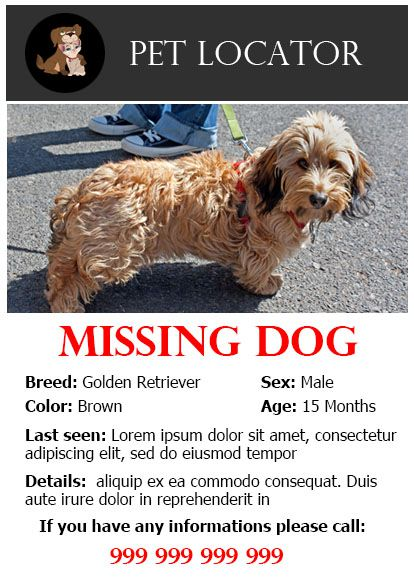 20 Best Lost Dog Flyer Templates Demplates .
