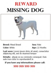 Lost Dog Flyer Template-6