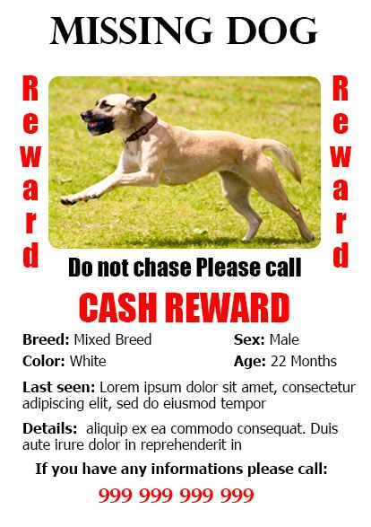 Lost Dog Flyer Leoncapers
