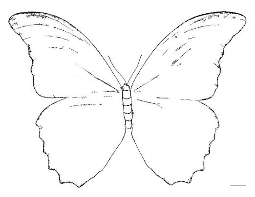 Blue Butterfly Coloring Page