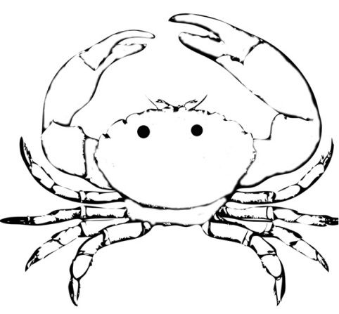 Blue Crab Coloring Page