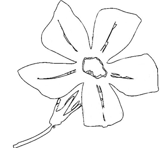 Blue orchids coloring page