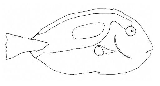 Regal Blue Tang Coloring Page