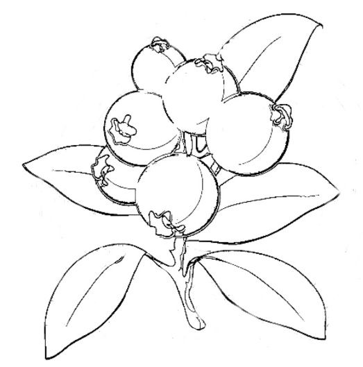 Blue Berries Coloring Page
