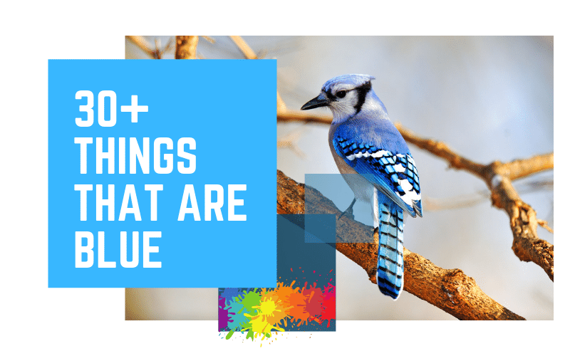 Things That Are Blue | Learning Colors for Kids | 30+ Blue