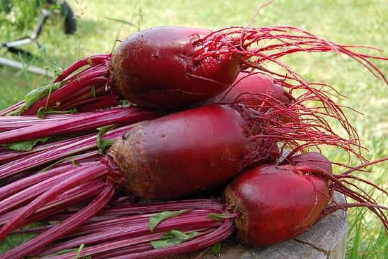 Beet - things that are red