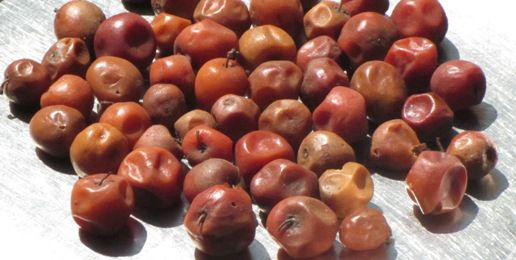 indian dates - things that are red