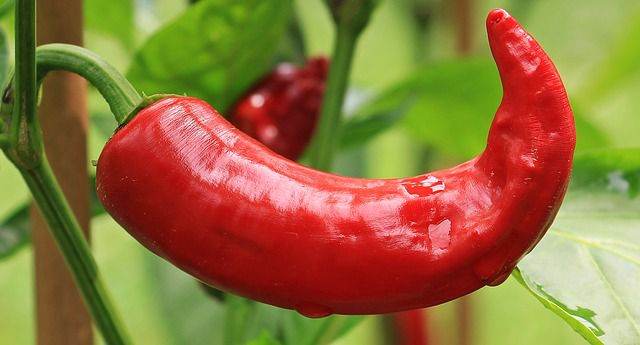 Red Chilli - things that are red