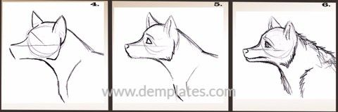 how to draw a wolf head - 9_1