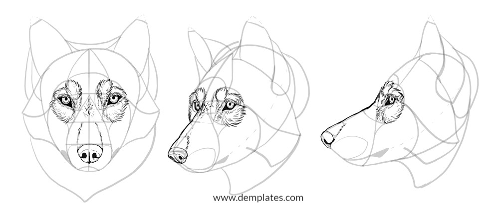 how to draw a wolf head - 9