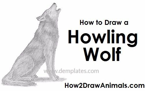 how to draw a wolf howling - 10
