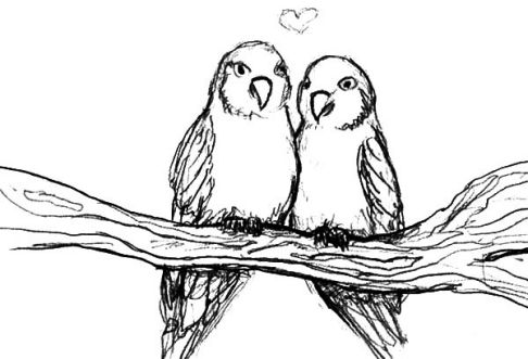 Love Birds Drawing