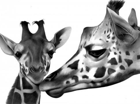 Love Giraffe Drawing