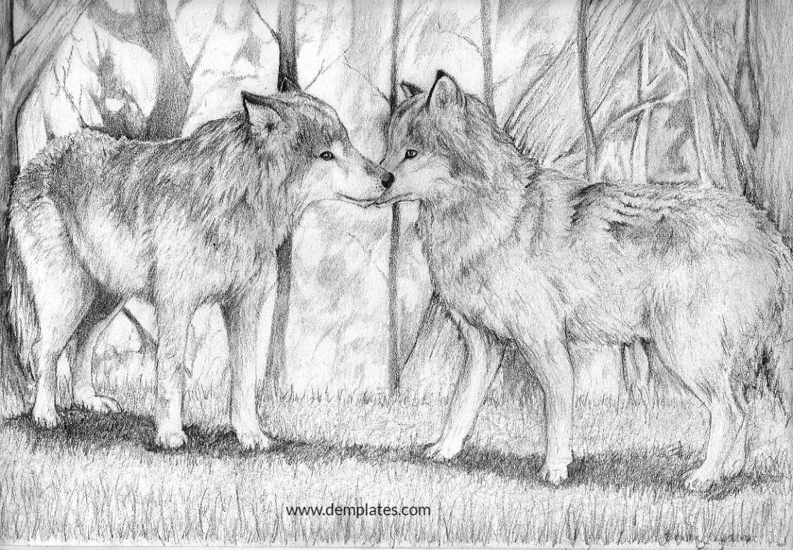 Wolf Love Drawing - 4_2