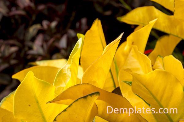 Yellow Leaves - Things That are Yellow
