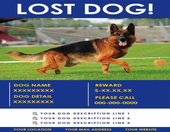 Found Dog Description