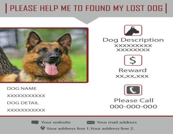 Help Found Dog