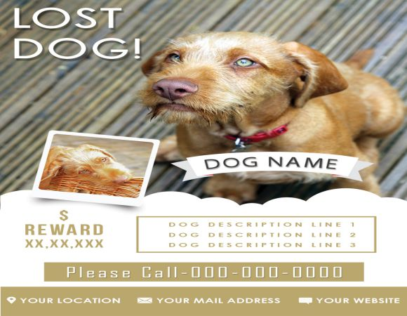 Found Dog Flyer: 10 Best Flyers to Help finding Lost Dogs - Demplates