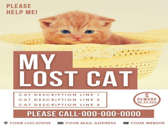My Lost Cat