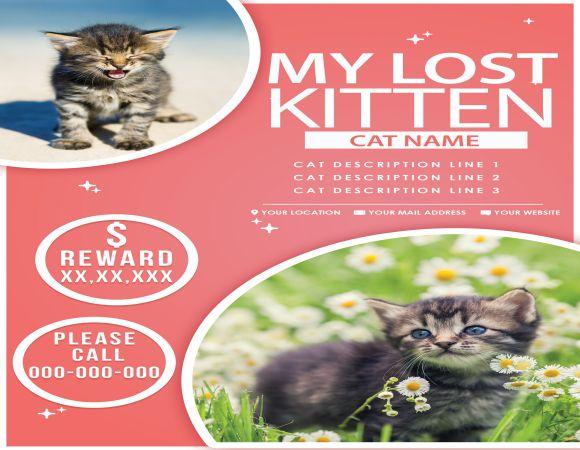 My Lost Kitten