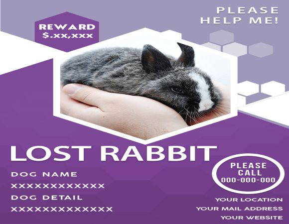 My Lost Rabbit